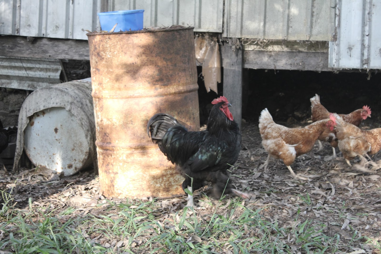 16-03-2016-australia-siebert-surfboards-06